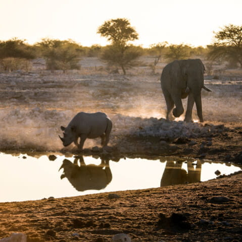 Elephant and Rhino by a waterhole