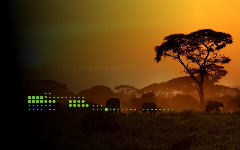 Elephants in sunset in Africa