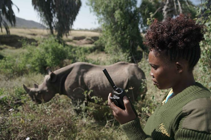 A woman standing talking on a radio with a rhino in the background