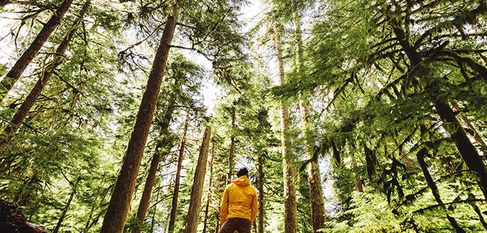 Man standing in a forest looking up at the trees