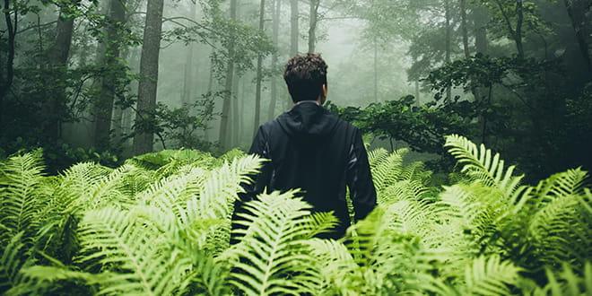 Man walking through a jungle