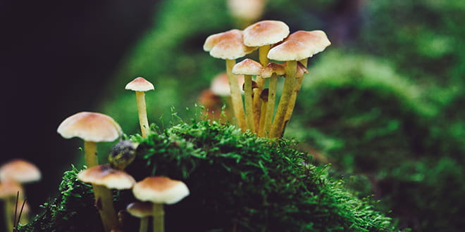 Mushrooms are secure-by-design